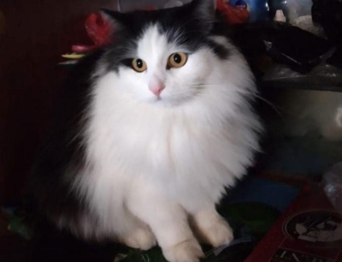 Жительница Ленинградской области написала донос на кота Пушка