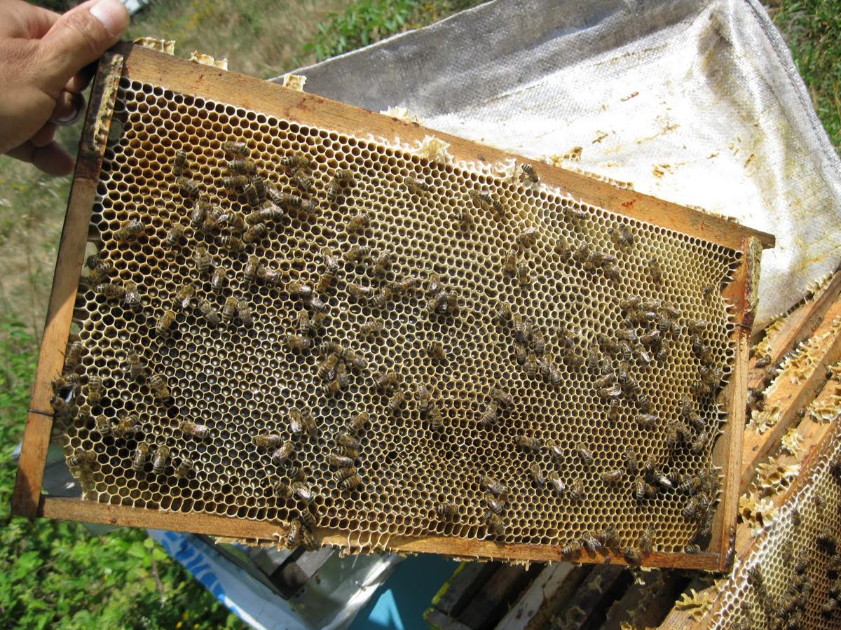 Красноярск гибель 20 млн пчел