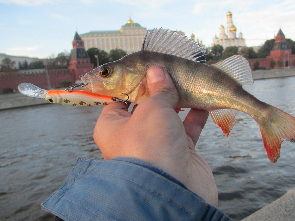 Рыба в Москва-реке