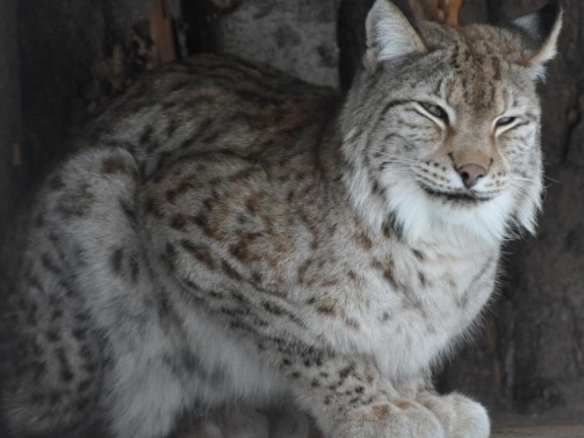 В РФ охота на краснокнижных животных
