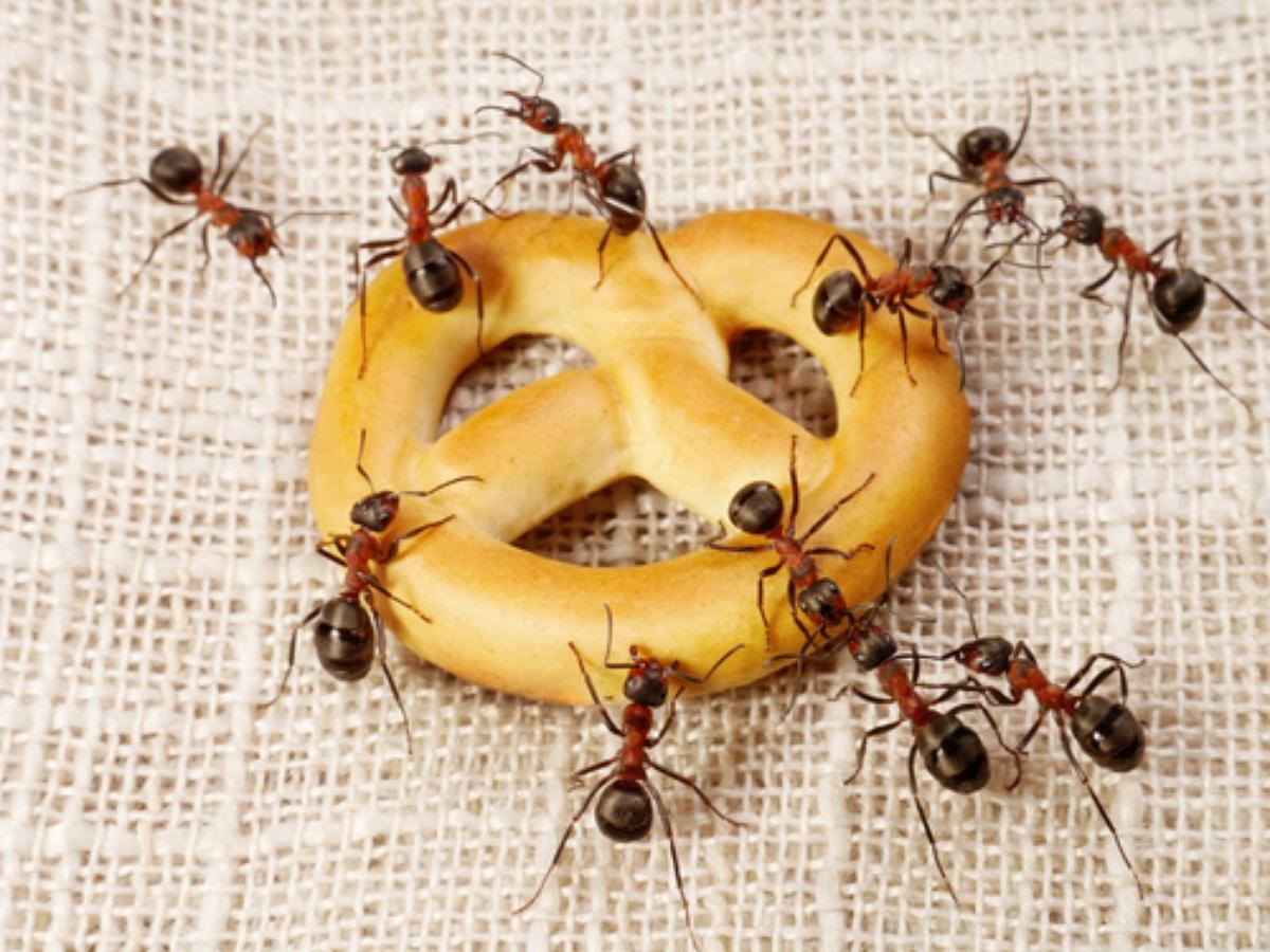 ТикТокерша открыла муравьиный ресторан и получила миллионы просмотров пользователей