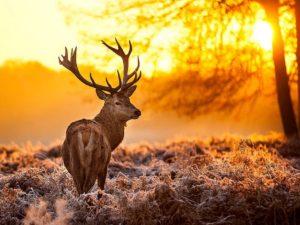 В Монтане олени попали в огненную ловушку из-за лесных пожаров