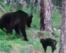 """""""Вася, успокойся, не надо нам столько мяса"""": кот защитил хозяев от медведя"""