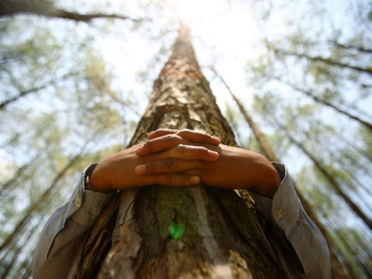 Россия повторно примет участие в чемпионате по обниманию деревьев