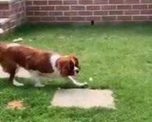 Мальчик выпустил бабочку, выращенную им из гусеницы, а через секунду ее сожрал пес