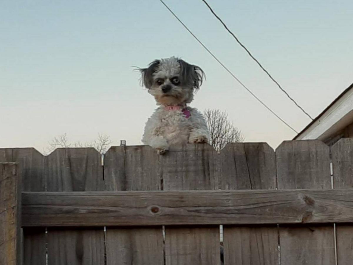 Фото собачки устрашающего вида стало новым сетевым мемом