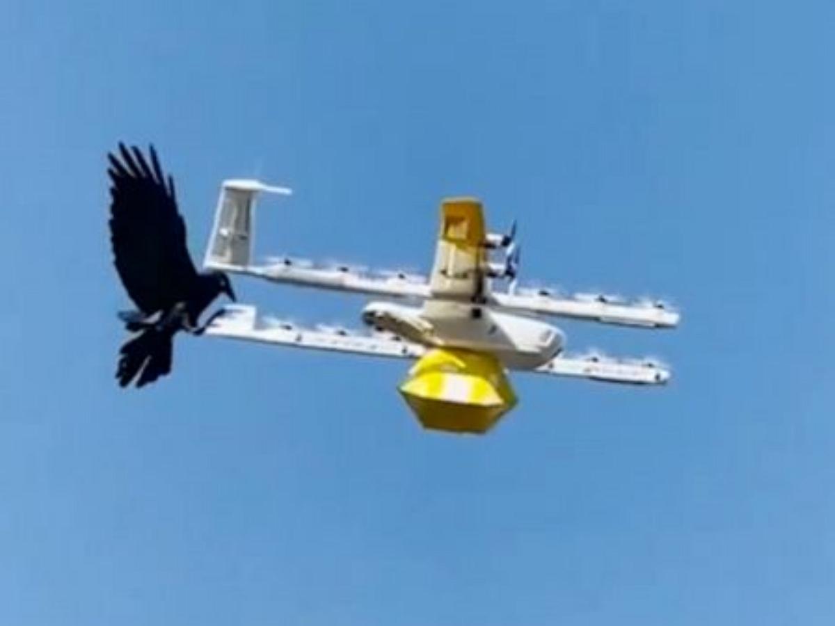 В Австралии вороны нападают на дроны, доставляющие посылки