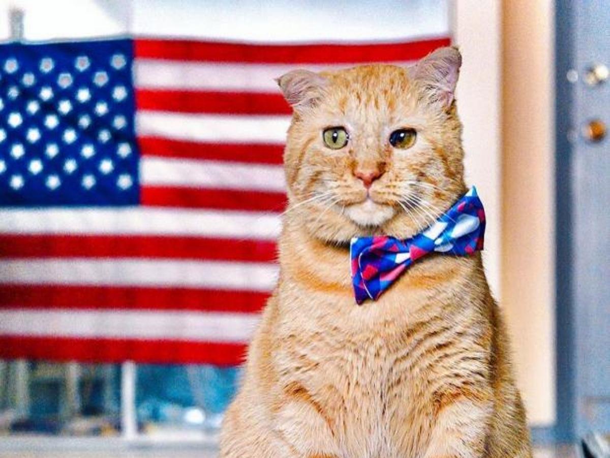 Фанаты поймали падающего кота в американский флаг