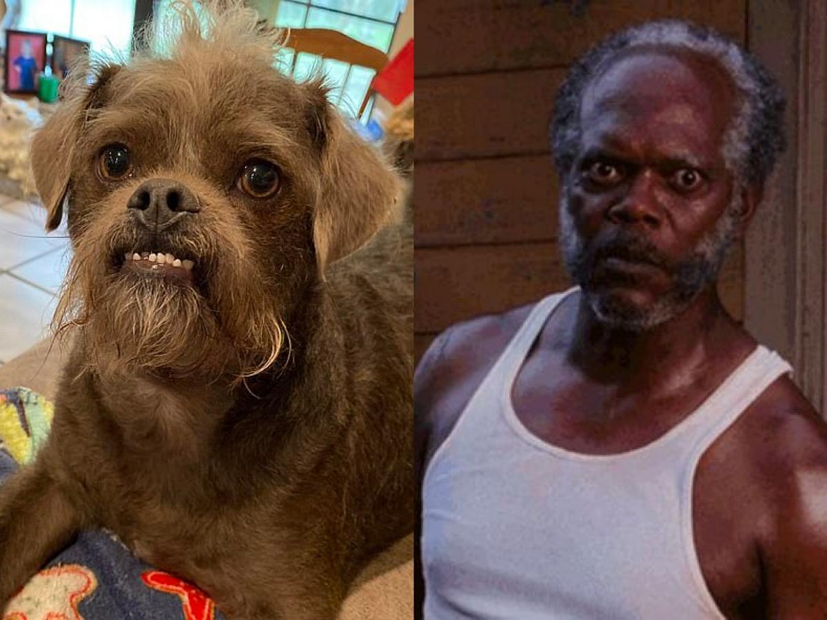 Фото собаки с лицом, похожим на актера Сэмюэля Л. Джексона, поразило пользователей
