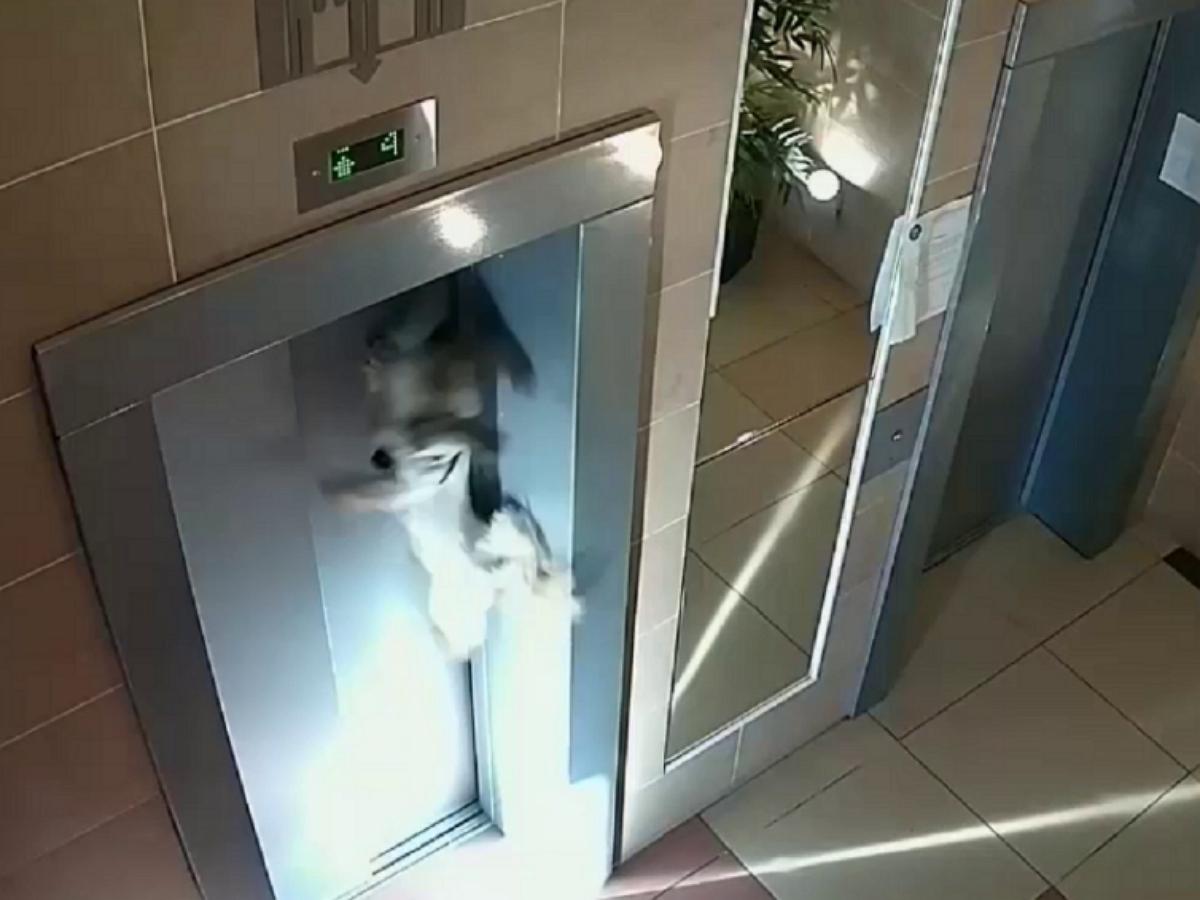 В Москве хозяйка чуть не убила собаку лифтом