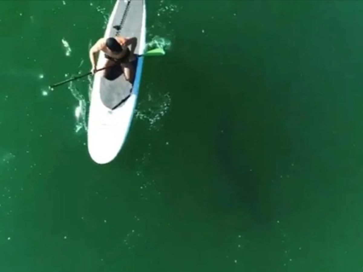 Орландо Блум с акулой