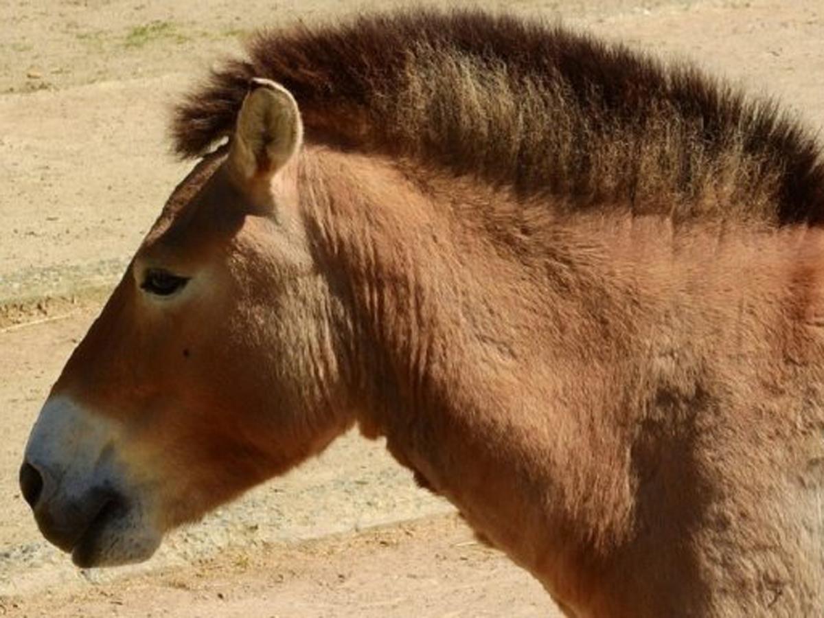 РФ 11 видов животных исчезли
