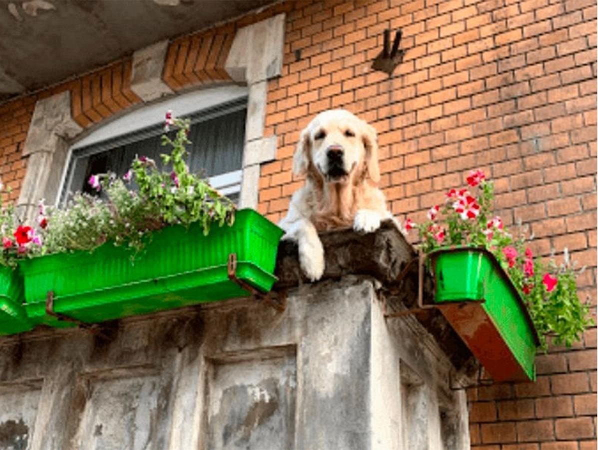 """""""Милый пес на балконе"""": новая достопримечательность Гданьска обнаружена на картах Google"""