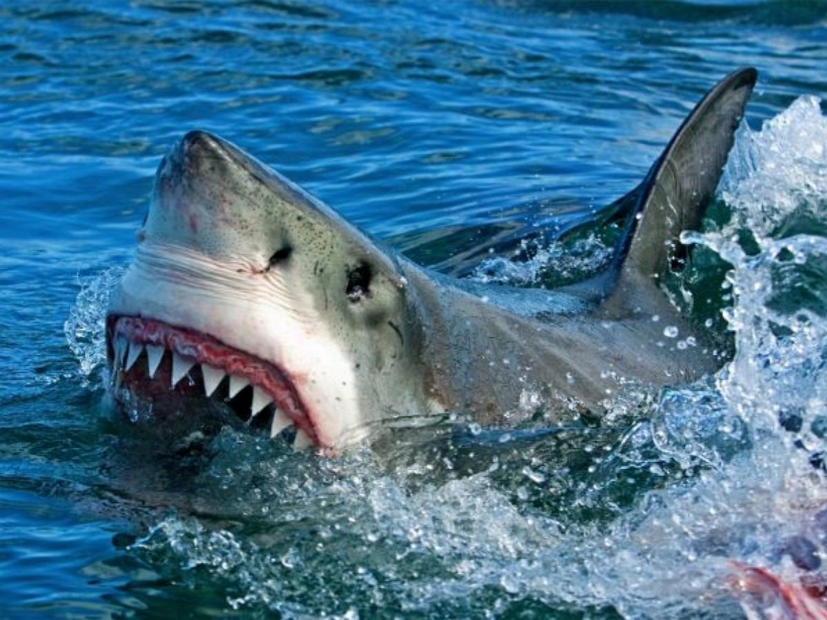 В Египте акула откусила руку мужчине