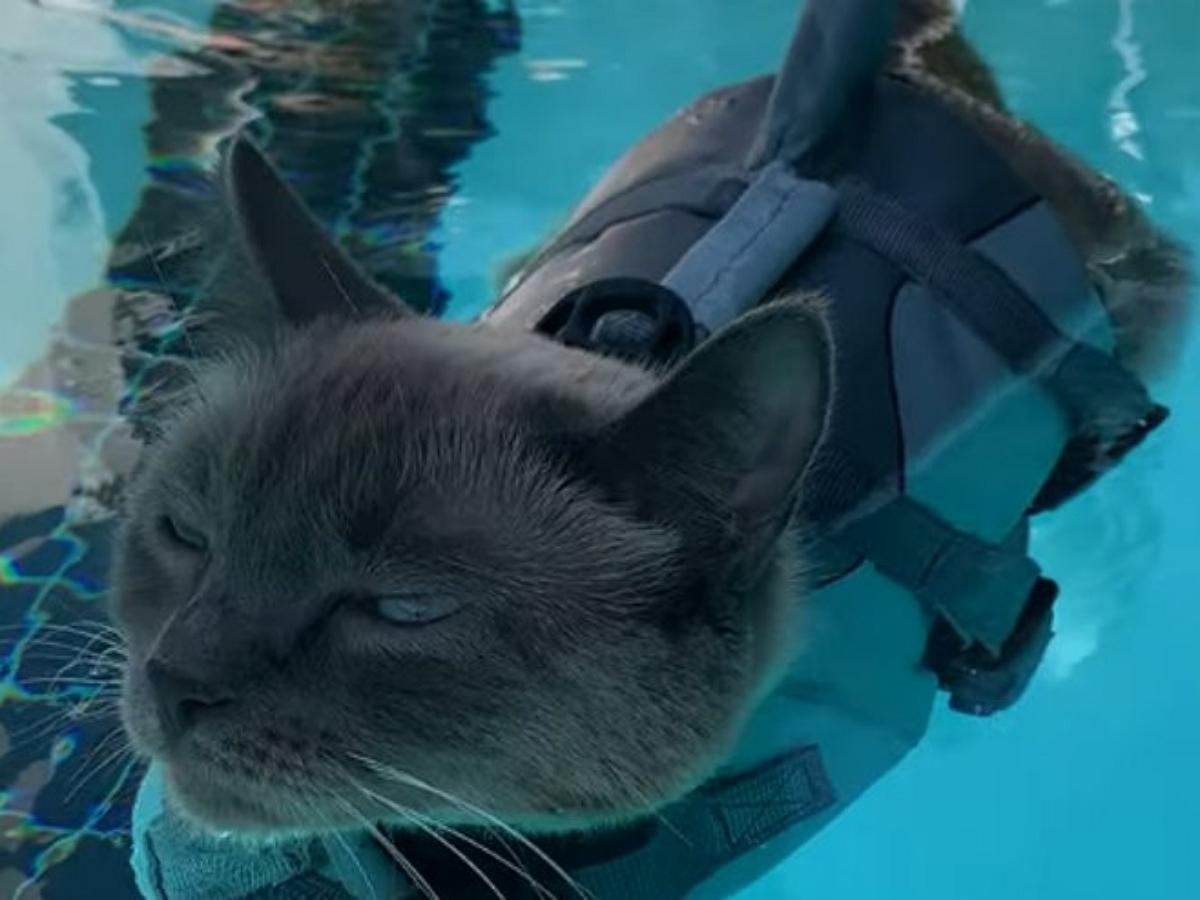 Котик в костюме акулы плескается в бассейне