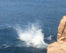 Синхронный прыжок в море пса и хозяина умилил пользователей