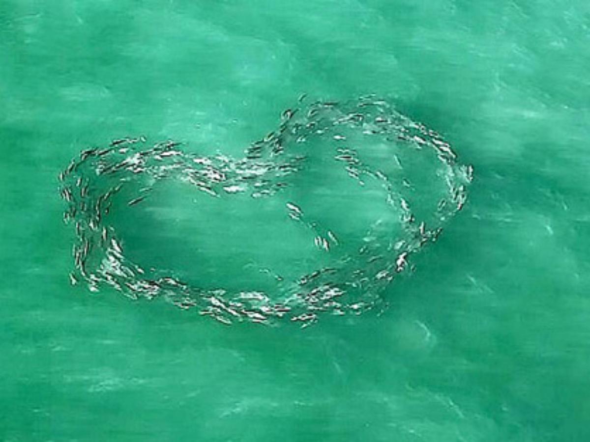 """""""Сердечное шоу"""", устроенное рыбами, сняли с дрона"""