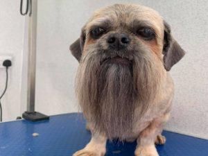 Пес с окладистой бородой заткнет за пояс любого хипстера