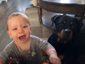 Пёс знает как остановить детский плач