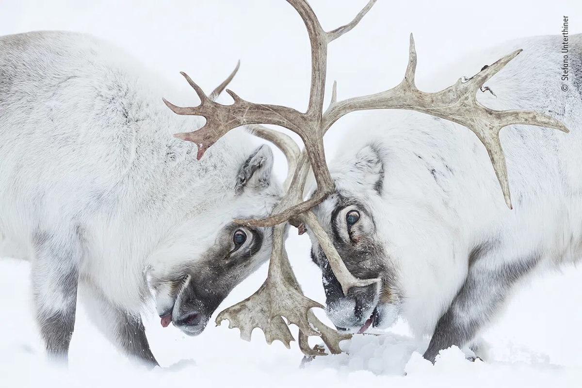 Фото года дикой природы 2021 от Лондонского музея естествознания