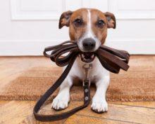 Собачка так мило просится на прогулку, что отказать ей невозможно
