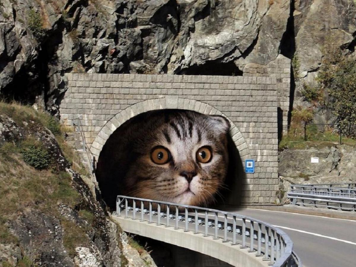 Креативный художник показал, что случится с планетой, если котики внезапно вырастут