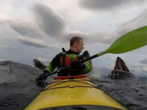 Три кита внезапно появились у каякера за спиной