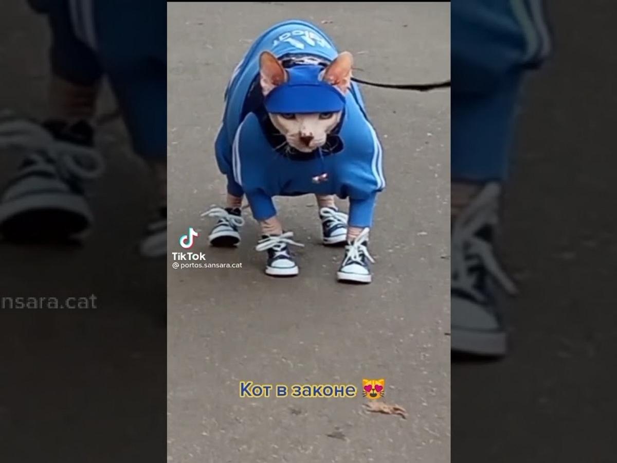 """Кота Портоса в костюме Adidas и кедах прозвали """"котом в законе"""""""