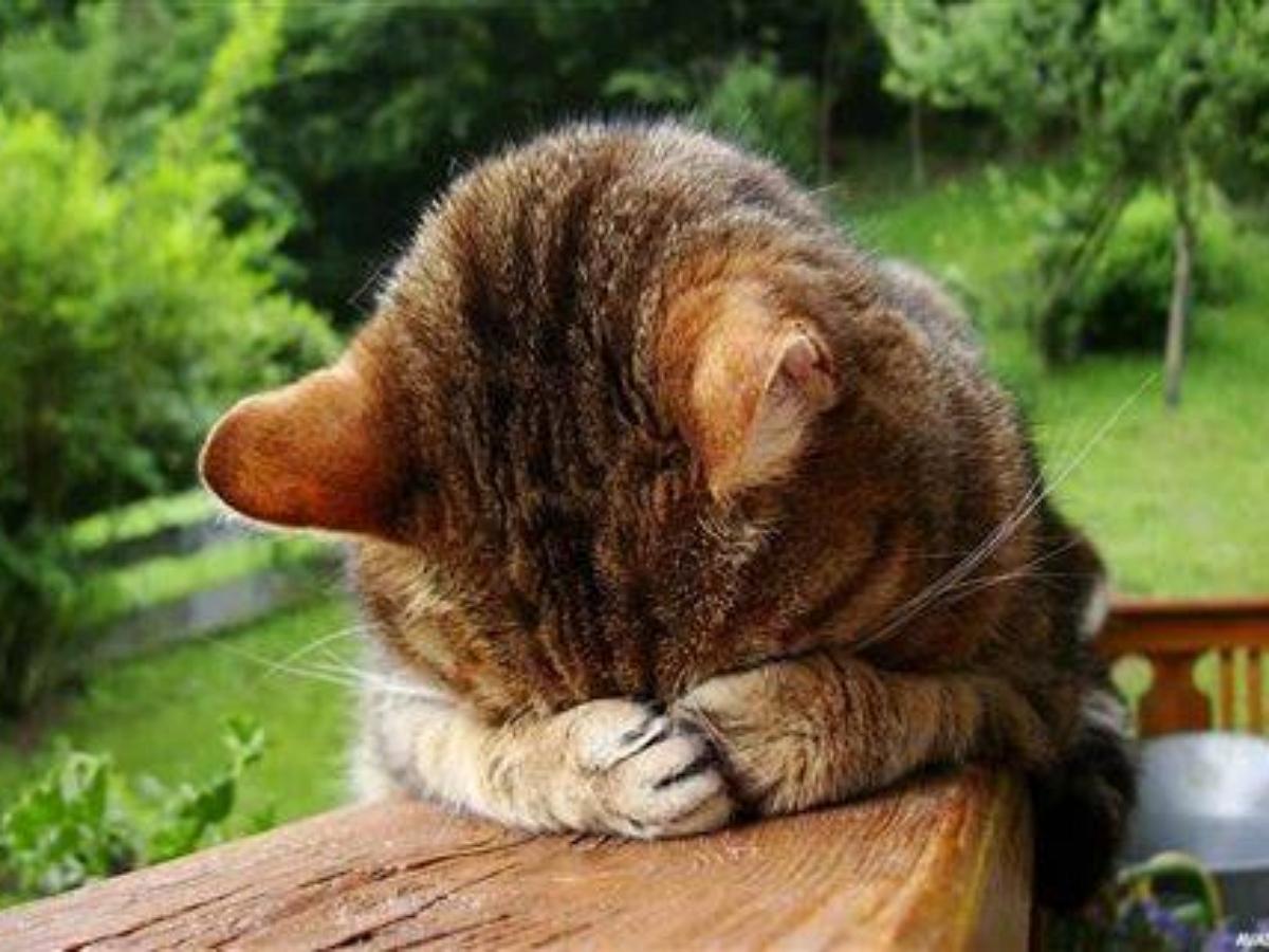 Ластящийся к хозяйке котик умилил Сеть