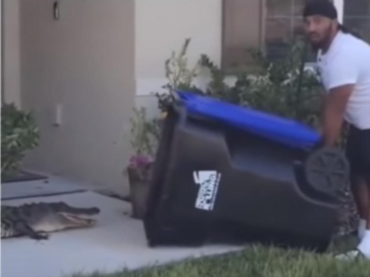 В США мужчина ловко изловил аллигатора с помощью мусорного бака