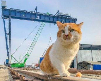 Рыжий кот стал главной звездой Крымского моста в американских СМИ