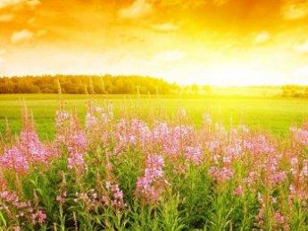 1 июля отмечается Ярилин день (Макушка лета)