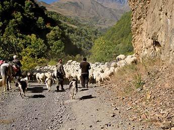 В Грузии 19-летний пастух убил семью из США вместе с маленьким ребенком