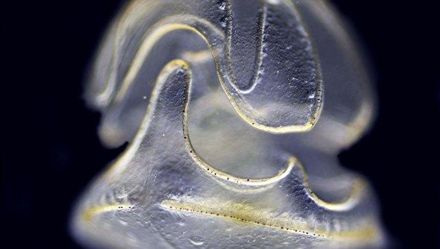 Вокеане водится колобок— Ученые
