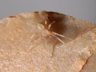 Редкий паук, обнаруженный в городе Сан-Антонио в штате Техас, заставил власти приостановить