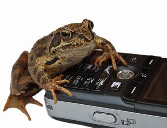 Новый закон приведет к подорожанию мобильной связи на 15%