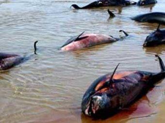 Около 30 дельфинов убито браконьерами под Анапой