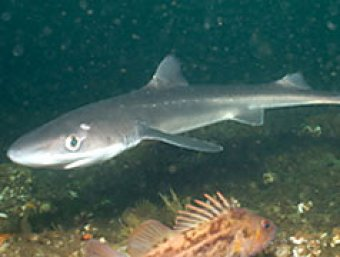 "Как рассказал  ""Интерфаксу "" один из очевидцев,  ""акулу заметили у..."