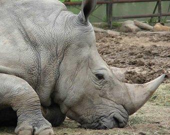 Западную Европу охватила волна зоологических краж