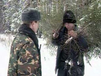 За срубленную в столичном парке елку могут посадить