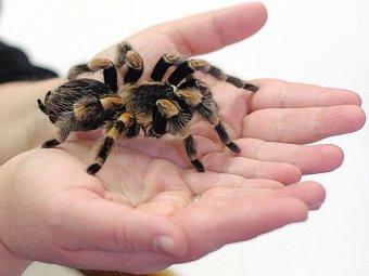 В Индии гигантские пауки убили двух человек