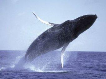 Туша гигантского кита, выброшенного на пляж, стала проблемой для Сиднея