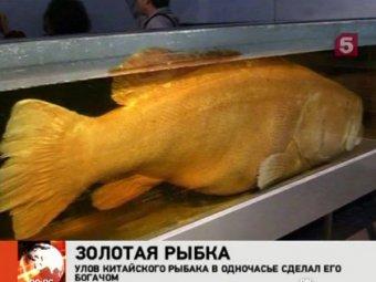 """Китаец поймал """"золотую рыбку"""" ценой  тысячи"""