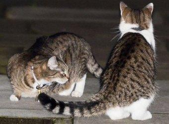Полиция разняла драку котов британского премьера и главы минфина