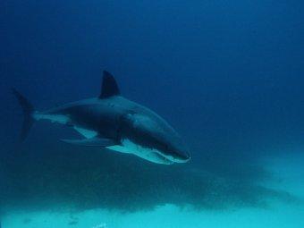 На Гавайях скончалась немецкая туристка, которой акула откусила руку
