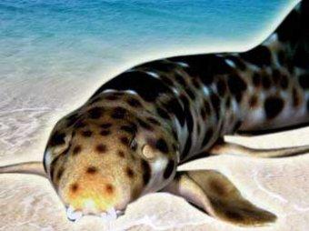 """В мире появился новый вид акул – они умеют """"ходить"""""""