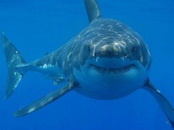 В бразилии акула откусила туристке ногу на глазах отдыхающих видео