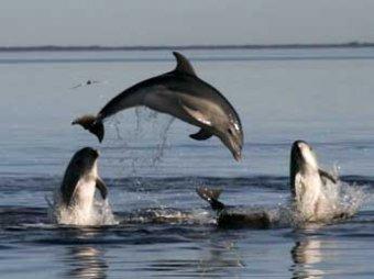 Более 750 дельфинов массово выбросились на побережье в США