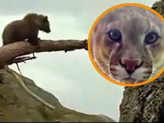 скачать фильм медведь через торрент - фото 8