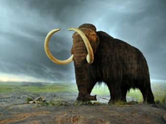 Археологи доказали, что в вымирании мамонтов и людей метеорит не виноват
